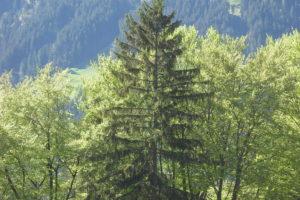 Wohngesundheit durch Bäume und Holz