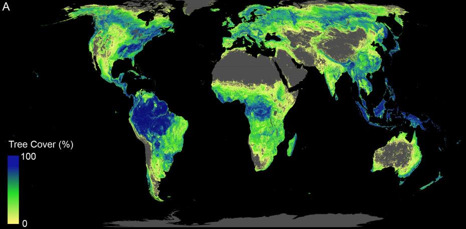Kohlenstoffsenke